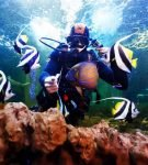 Водолаз кормит скалярий в аквариуме Ocean Park