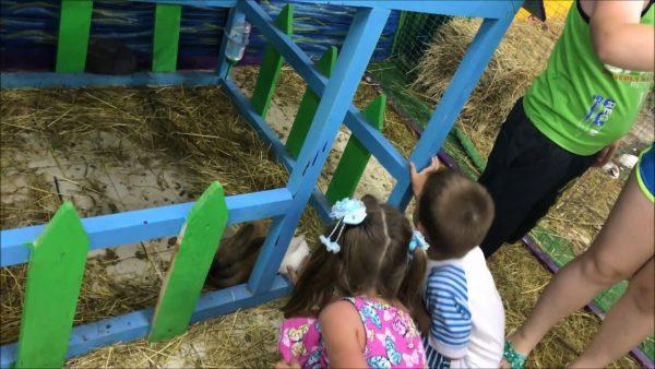 Детский зоопарк «Живой контакт с природой» в Лазаревском