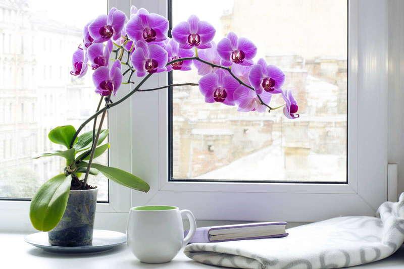 10 орхидей, которые лучше других подойдут для выращивания в комнате