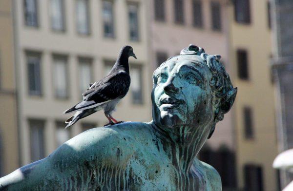 голубь на памятнике