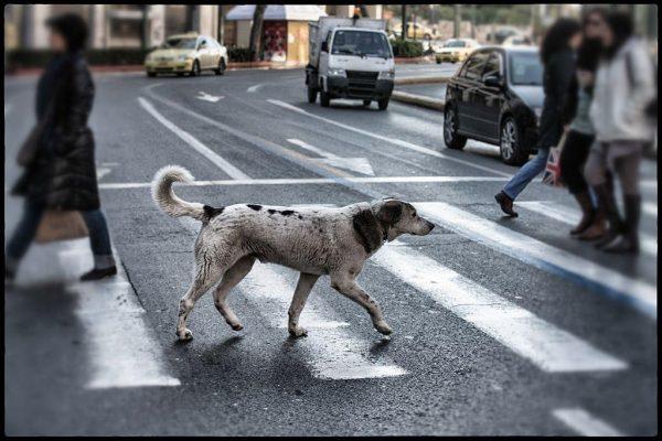 Дворняга пересекает дорогу