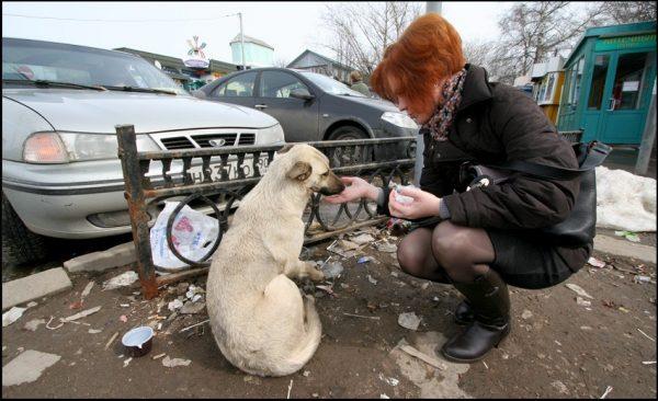 Женщина подкармливает бездомную собаку