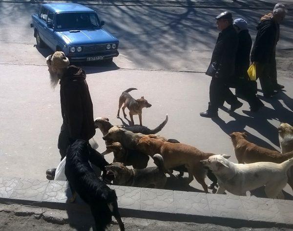 Собаки следуют за бездомным стариком