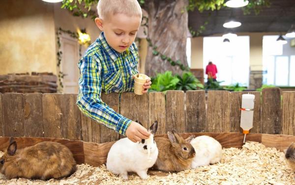 Кролики в контактном зоопарке