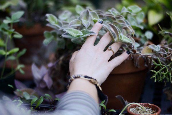 Рука с кольцом на фоне растений