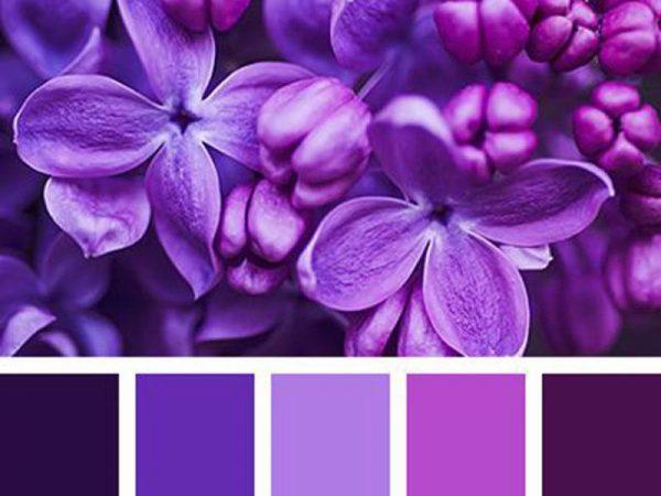 Фиолетовая палитра