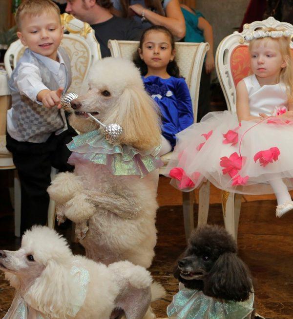 Пудель развлекает детей