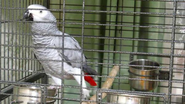 Попугай Кирюша в клетке