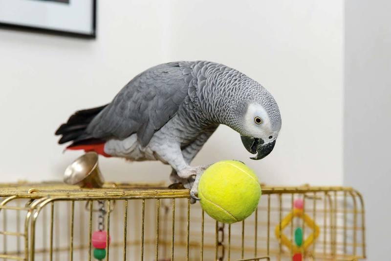 попугай Кирюша