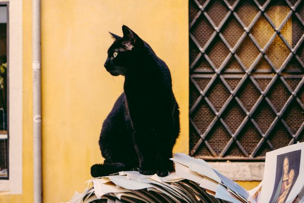 Кот сидит на бумагах